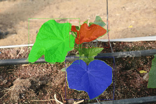 Project Cucumber Detection and Segmentation Picture 2